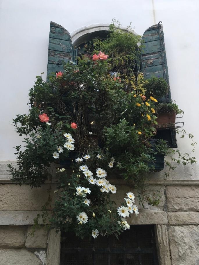 flowered-window-venice