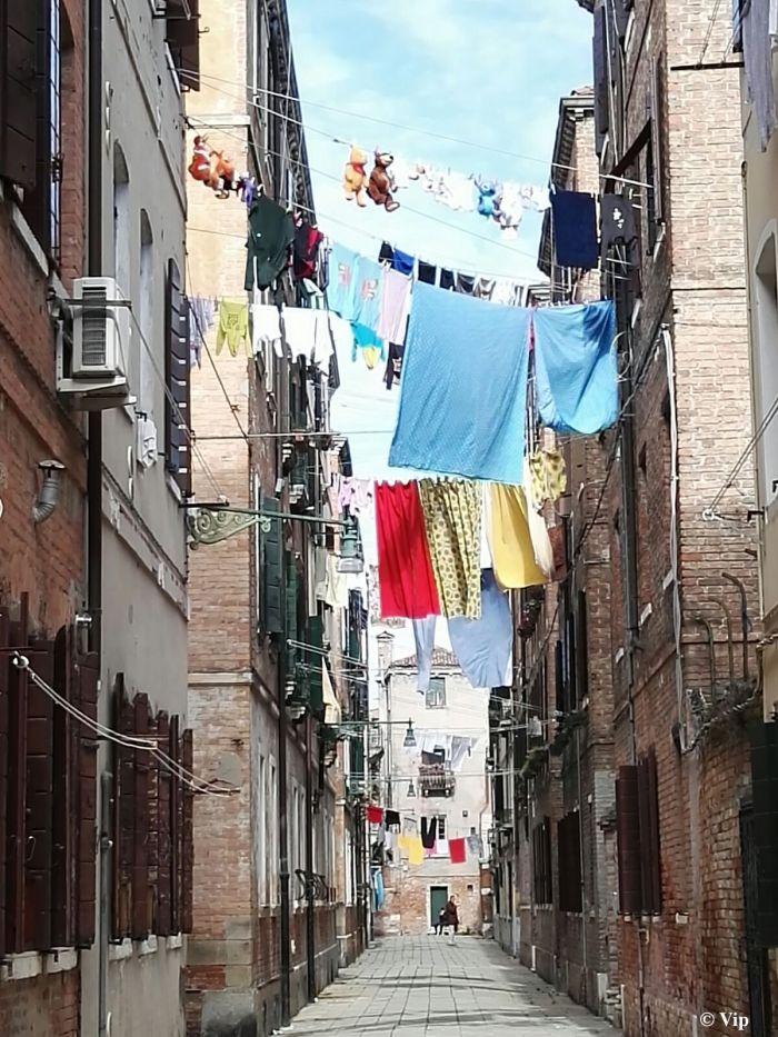 Orsetti a Venezia