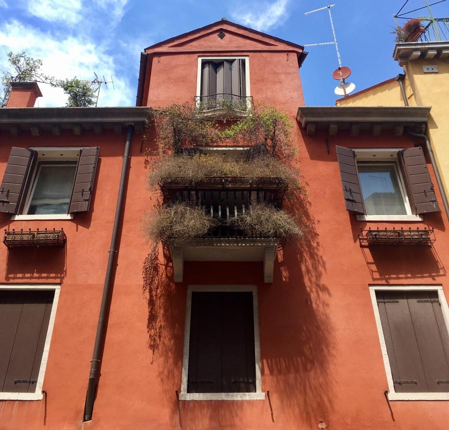 African vegetation in Venice