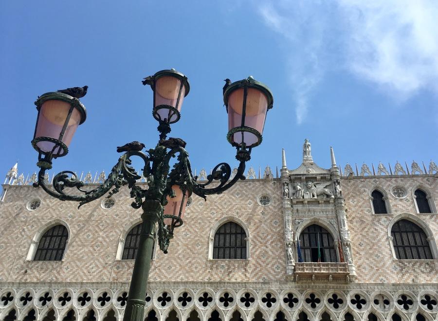 Palm tree in Venice