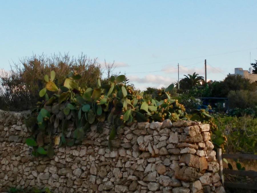 Puglia21